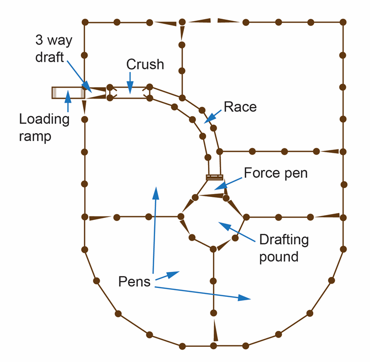 Basic yard layout showing the location of pens, drafting pound, force pen, race and loading ramp